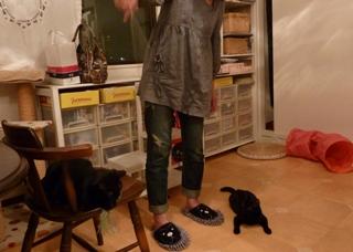 キャットシッターがやってきた猫 のぇるろった編。_a0143140_2532462.jpg