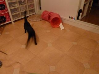 キャットシッターがやってきた猫 のぇるろった編。_a0143140_253510.jpg