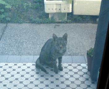 外猫ちん♪_f0183846_12332947.jpg