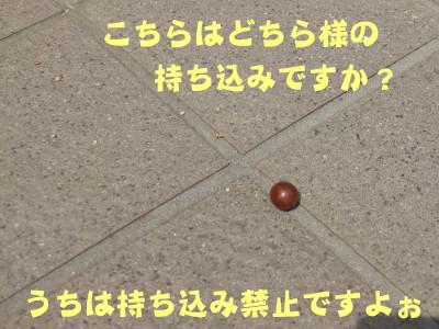 b0158061_21273241.jpg