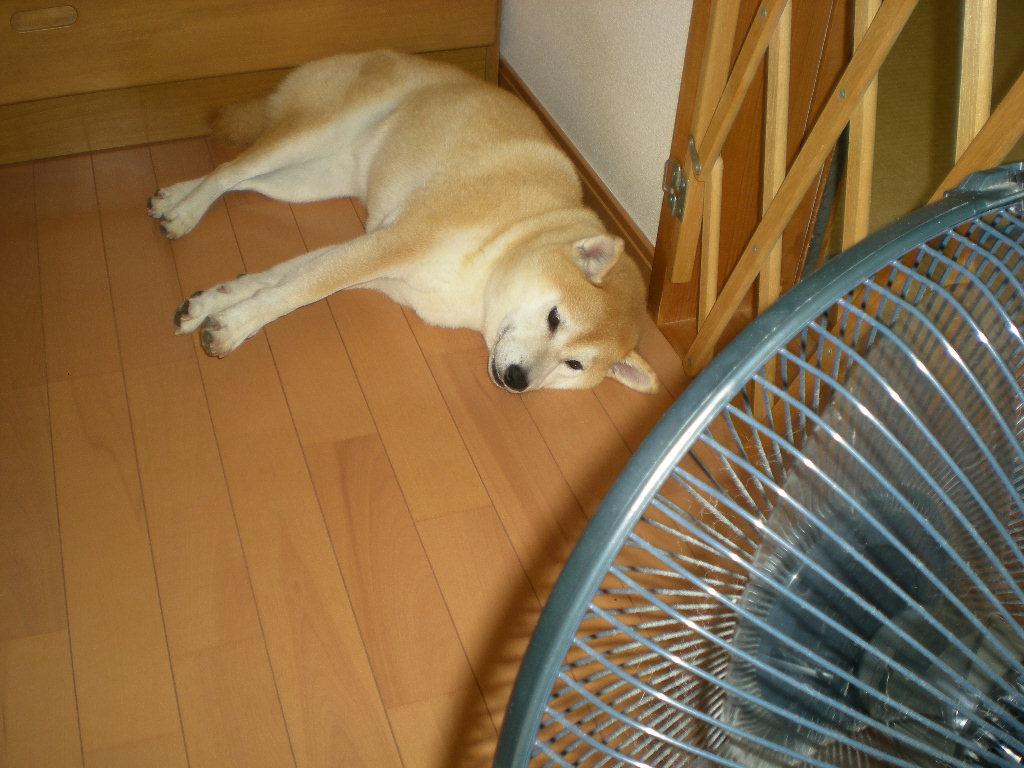 2010年8月30日(月)暑いけど快適!_f0060461_10213485.jpg