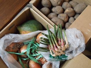 まさに産直野菜が到着!_d0178865_1420444.jpg