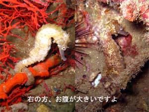 f0144385_22101745.jpg