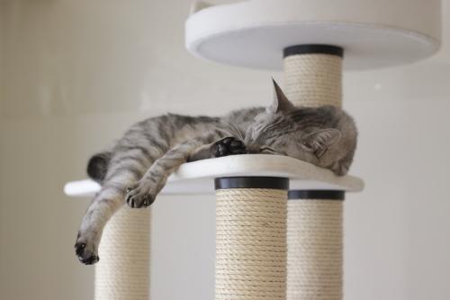 猫タワーでおやすみ中のお嬢さん