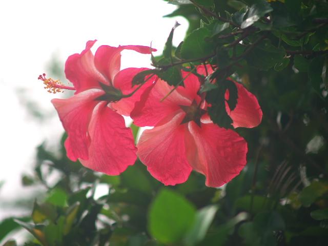 沖縄の風景 あの人に花を捧げたい_f0024992_835468.jpg