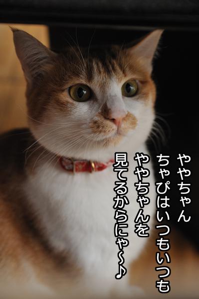 b0141397_10543247.jpg
