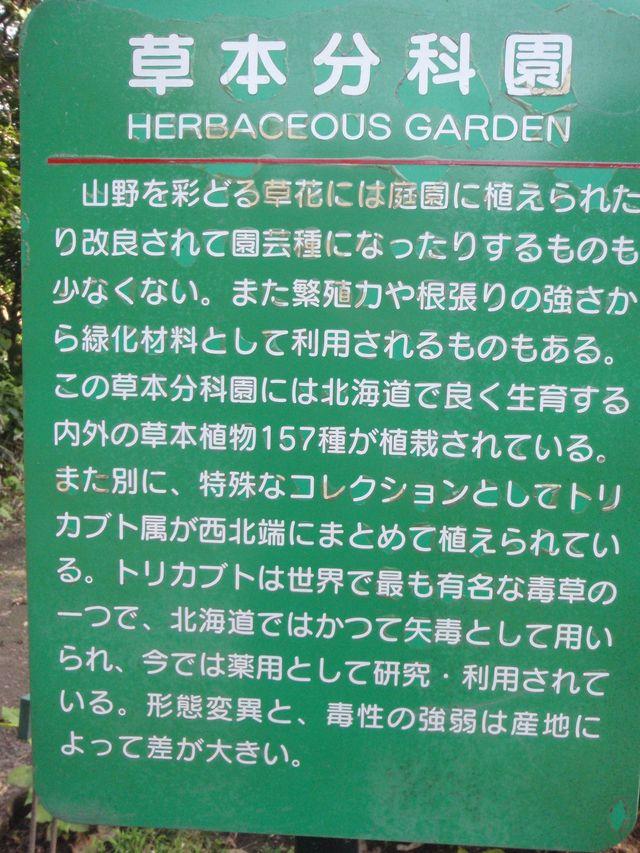 暑さの中の北大植物園_c0025115_20381745.jpg