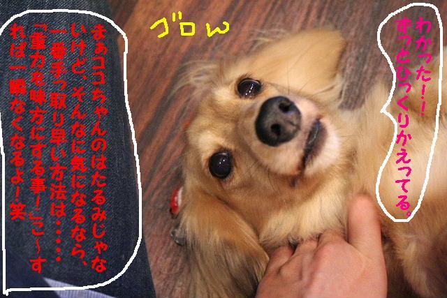 b0130018_9161265.jpg