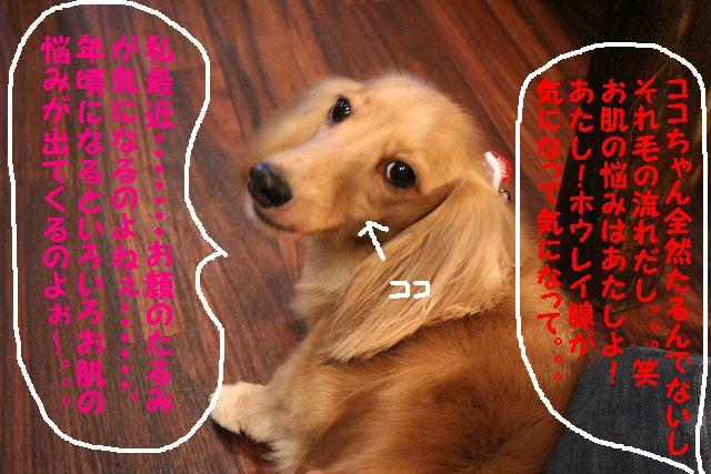b0130018_916746.jpg