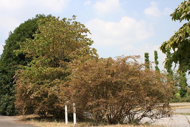 カラカラ乾燥の日々_d0150720_9533255.jpg