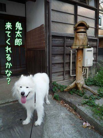 朝おば散歩_c0062832_16574176.jpg