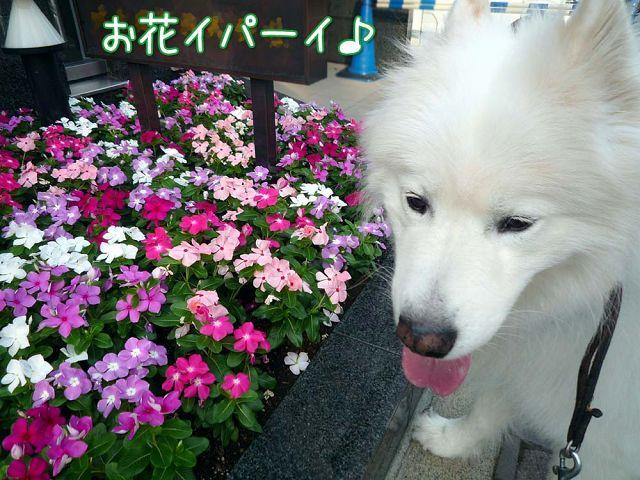 朝おば散歩_c0062832_16574783.jpg