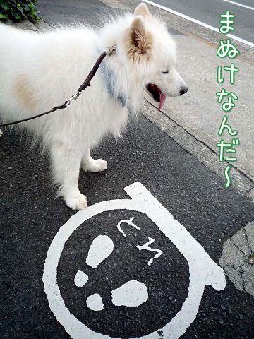 朝おば散歩_c0062832_1658162.jpg