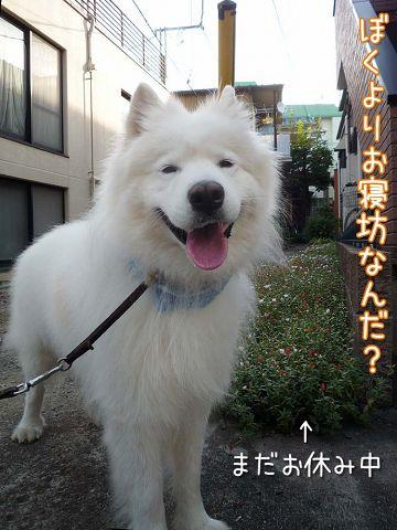 朝おば散歩_c0062832_16581825.jpg
