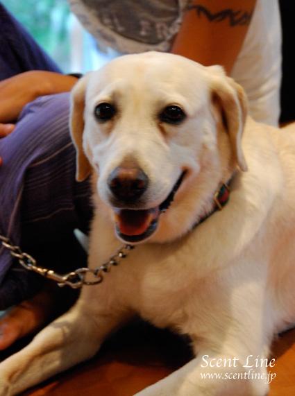 「愛犬の為の整体教室」第1回の模様_c0099133_023847.jpg