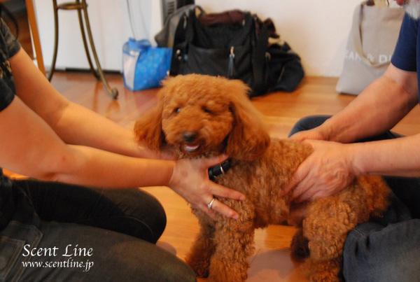「愛犬の為の整体教室」第1回の模様_c0099133_0513580.jpg