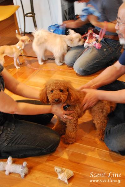 「愛犬の為の整体教室」第1回の模様_c0099133_0525230.jpg