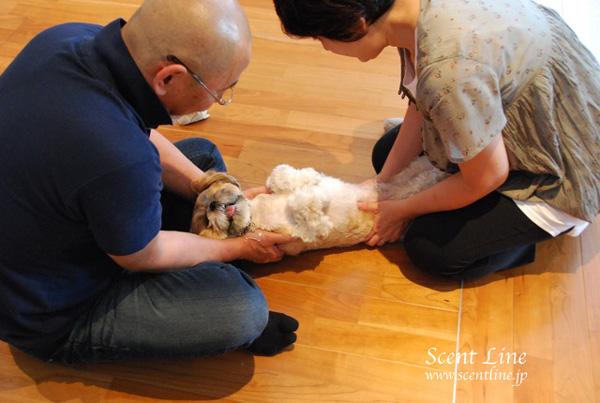 「愛犬の為の整体教室」第1回の模様_c0099133_0535480.jpg