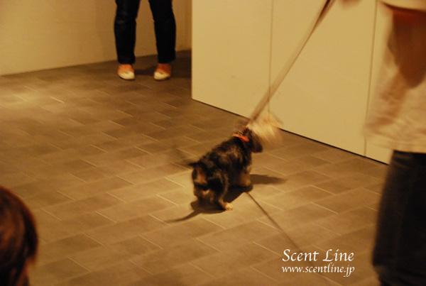「愛犬の為の整体教室」第1回の模様_c0099133_113380.jpg