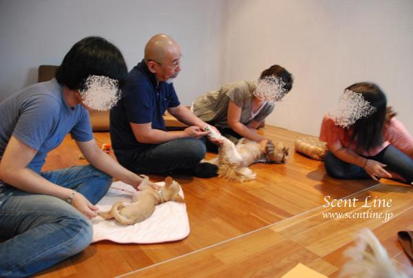 「愛犬の為の整体教室」第1回の模様_c0099133_1154873.jpg