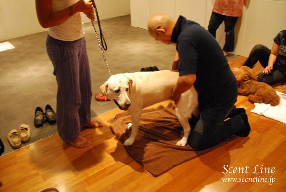 「愛犬の為の整体教室」第1回の模様_c0099133_1162320.jpg