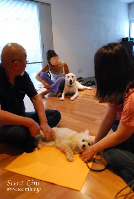 「愛犬の為の整体教室」第1回の模様_c0099133_1172836.jpg