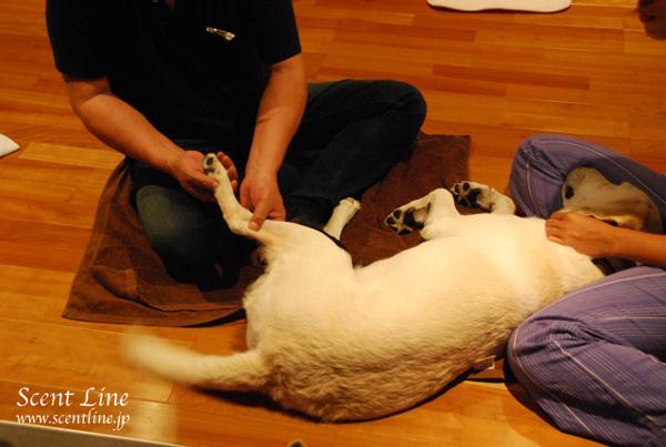 「愛犬の為の整体教室」第1回の模様_c0099133_134263.jpg