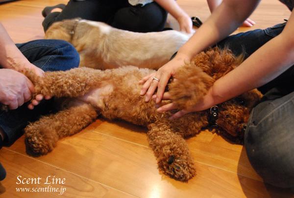「愛犬の為の整体教室」第1回の模様_c0099133_2214074.jpg