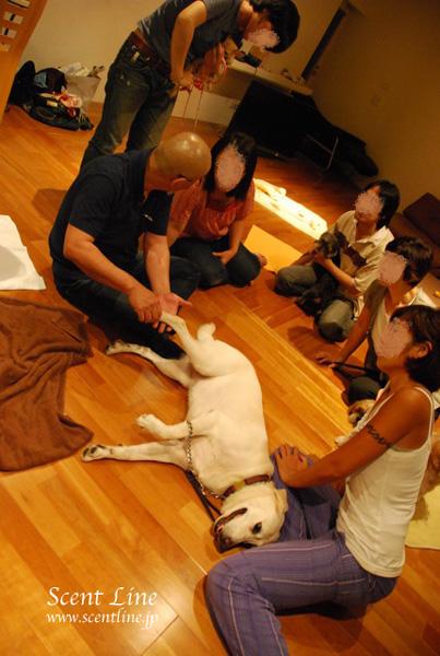 「愛犬の為の整体教室」第1回の模様_c0099133_2231821.jpg