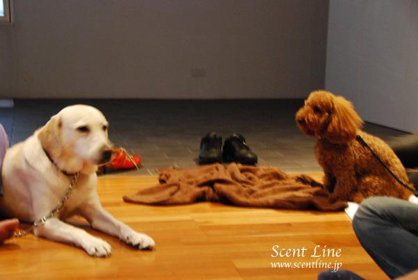 「愛犬の為の整体教室」第1回の模様_c0099133_226457.jpg