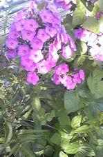 f0161535_21313736.jpg