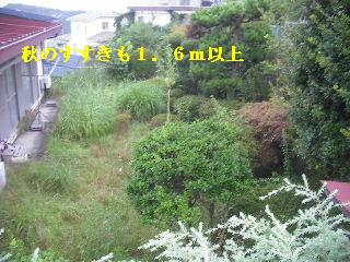 f0031037_19385129.jpg