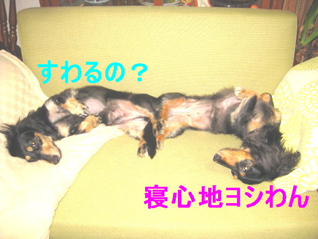 b0181341_1019591.jpg