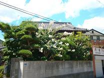 猛暑でも咲き続ける花・サルスベリ_e0175370_19524739.jpg