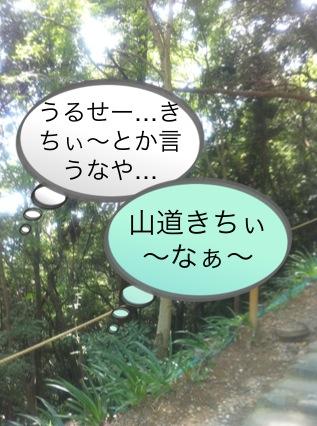 北斗の件 ~パワースポット 高尾山編~_f0236990_1574831.jpg