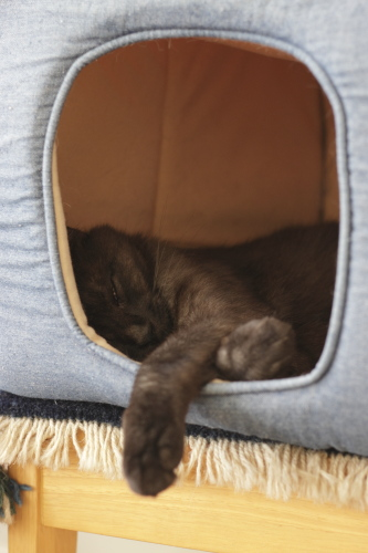 猫小屋にこもって、手だけだしている小僧