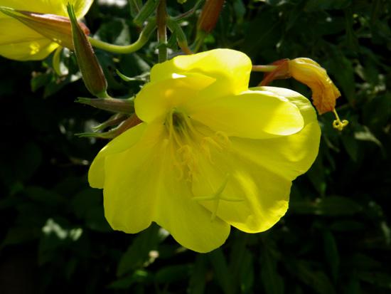 8月後半の庭の花♪_a0136293_10453092.jpg