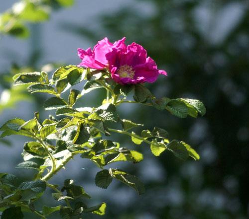 8月後半の庭の花♪_a0136293_1048324.jpg