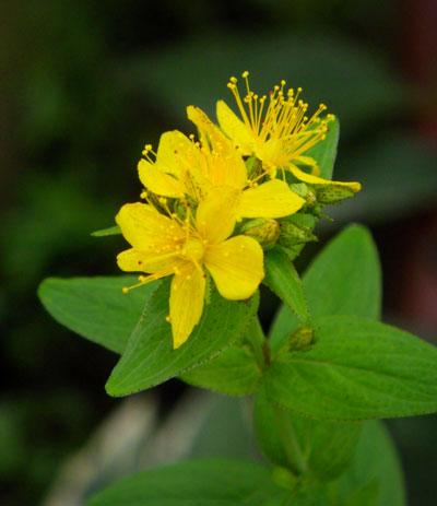 8月後半の庭の花♪_a0136293_10492624.jpg