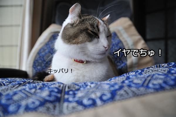 b0141397_10242546.jpg
