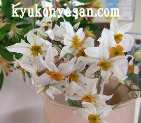 f0054197_1656750.jpg