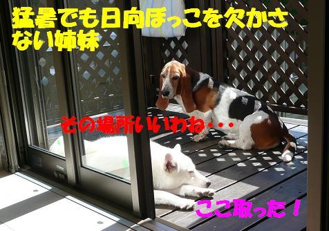 f0121712_22531735.jpg