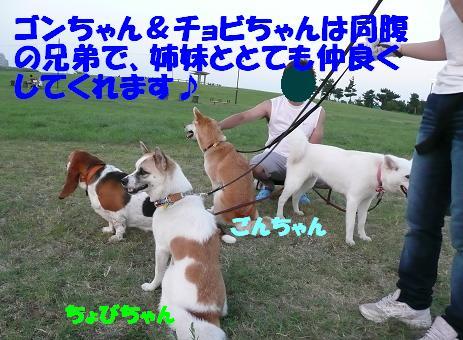 f0121712_23383479.jpg