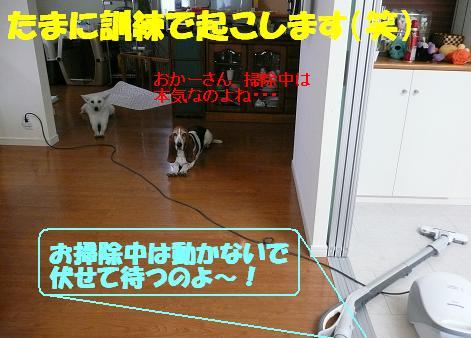 f0121712_2395452.jpg
