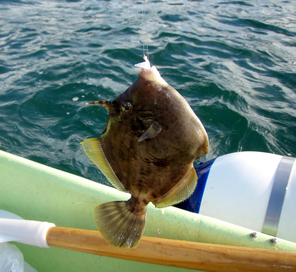 2010年9月1日(水) 豊浜より2馬力ボート釣り_d0171823_2121980.jpg