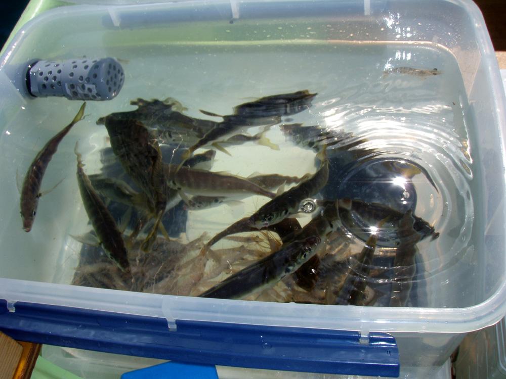 2010年9月1日(水) 豊浜より2馬力ボート釣り_d0171823_22313558.jpg