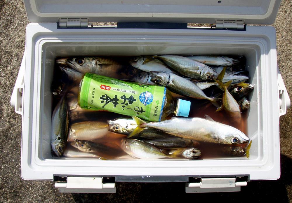 2010年9月1日(水) 豊浜より2馬力ボート釣り_d0171823_22353162.jpg