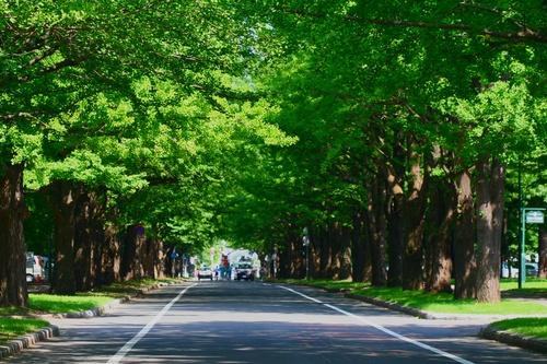 北海道大学_b0048834_14502255.jpg