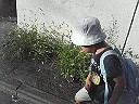 f0131936_1425515.jpg