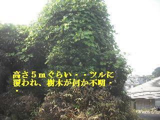 f0031037_226467.jpg